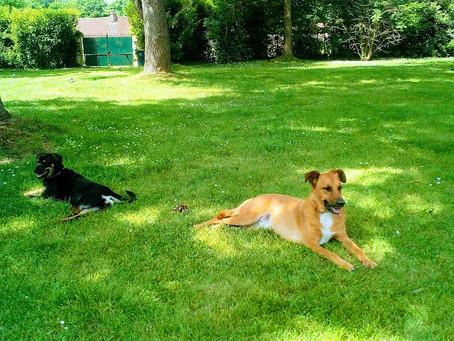 De plus grands espaces canins !