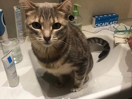 Pourquoi mon chat ne fais pas dans sa litière ?