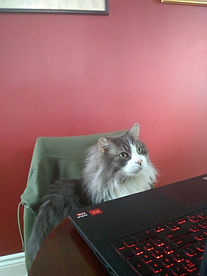 Johanna M - working from home gary.jpg