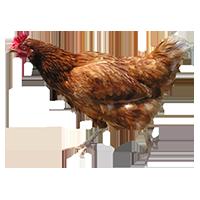 Brown-pollo