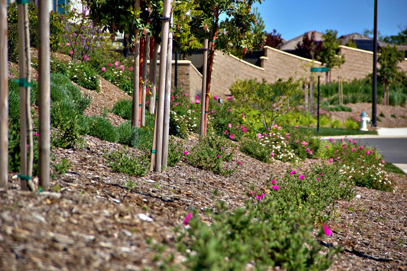 serrano village 6-el dorado hills_4.jpg