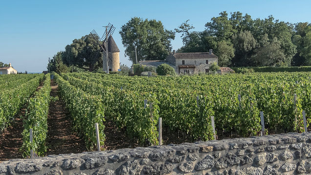 StEmillion Vineyard France with windmill