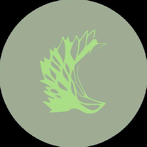 Vorratsflasche - herbal spring- 200ml