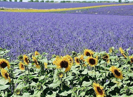 Provence Travel Guide/ The South of France Diary