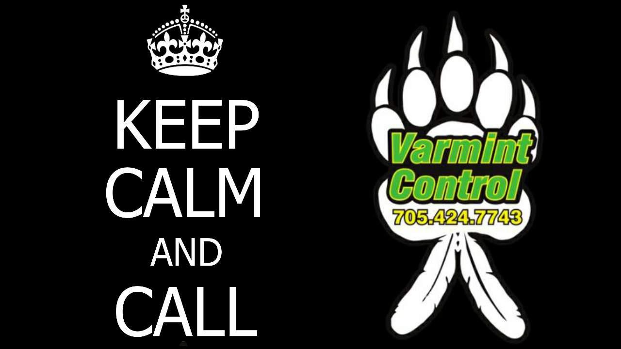 KEEP CALM - CALL VARMINT CONTROL