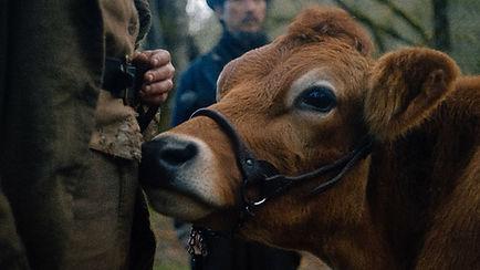 first-cow-1200-1200-675-675-crop-000000.jpg