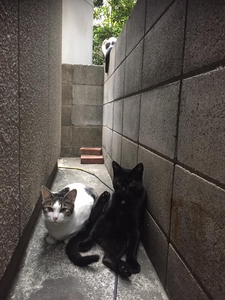 地域猫保護活動