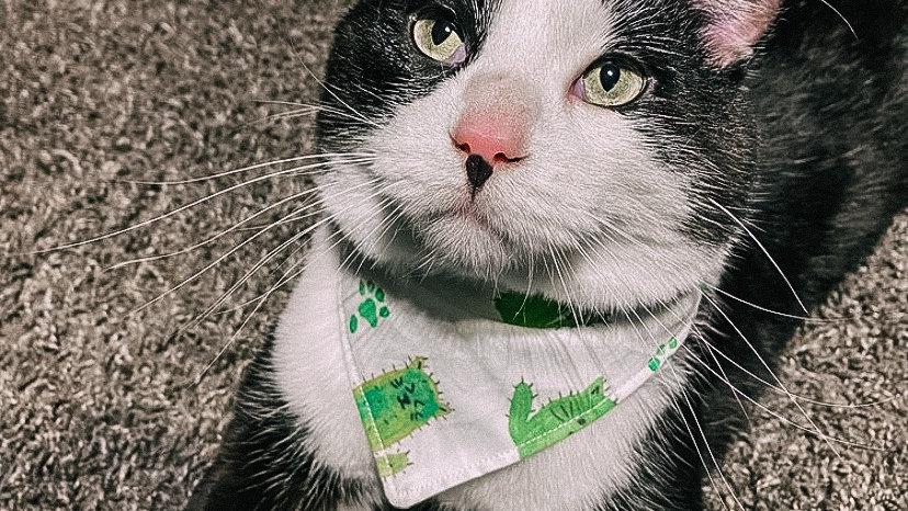 Cat-ti
