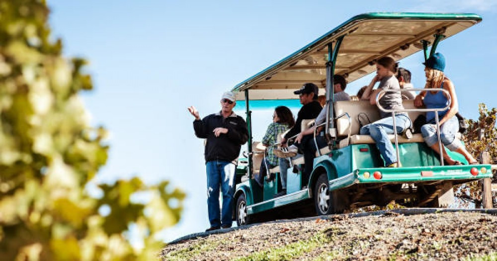 Wine Tour in a vineyard