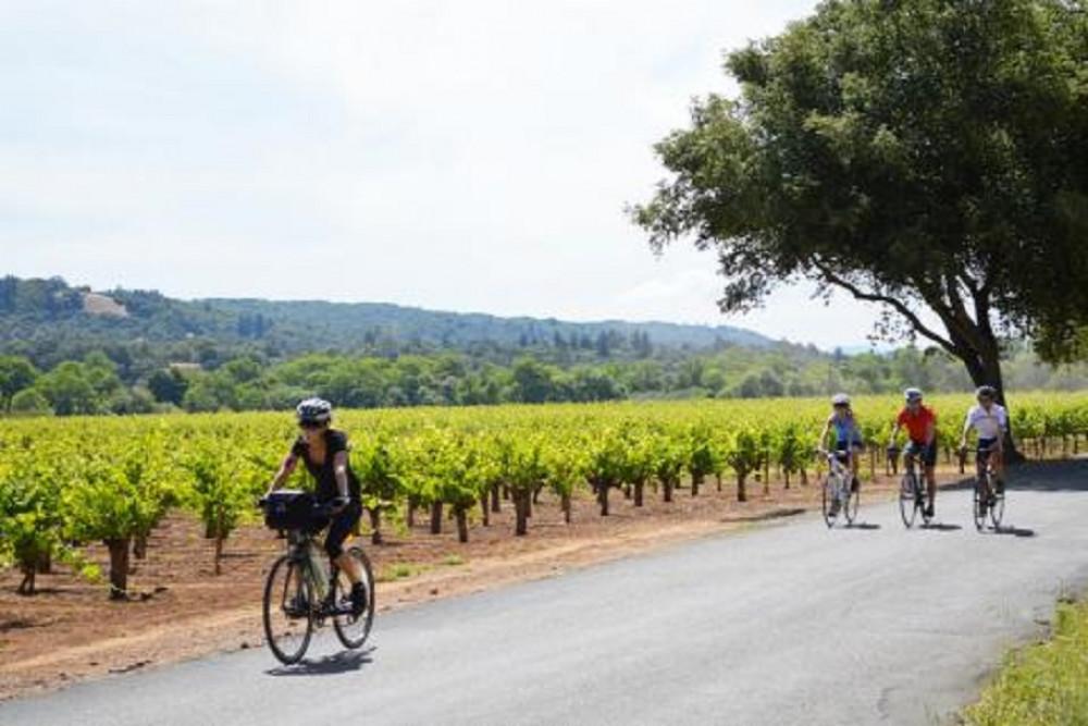 Cyclist riding near a vineyard