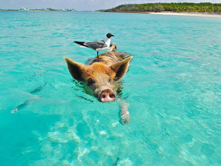 Four Things You Didn't Know About The Bahamas