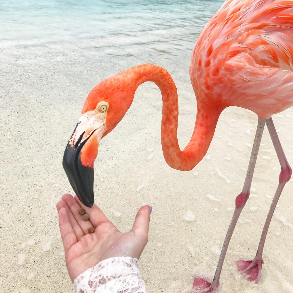 Pink flamingo on gray sand