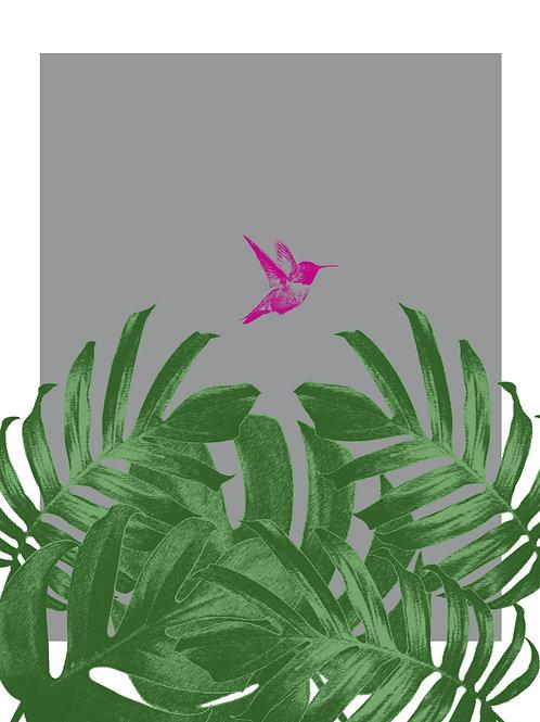 Tropical Humming Bird Flying