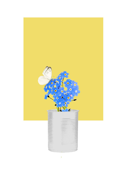 Forget-Me-Not with White Butterfly on Flower (Delicious Yellow)