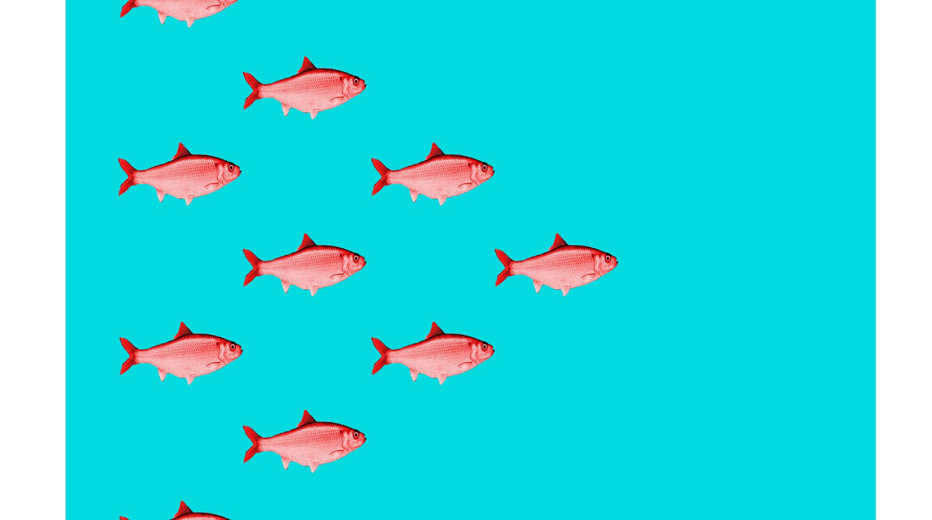 red herring swim copy.jpg