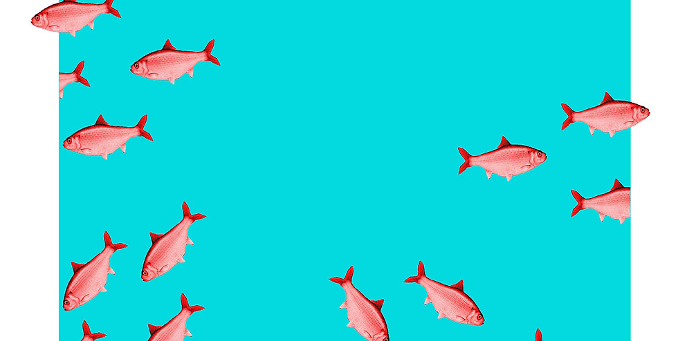 red herring chaos copy.jpg