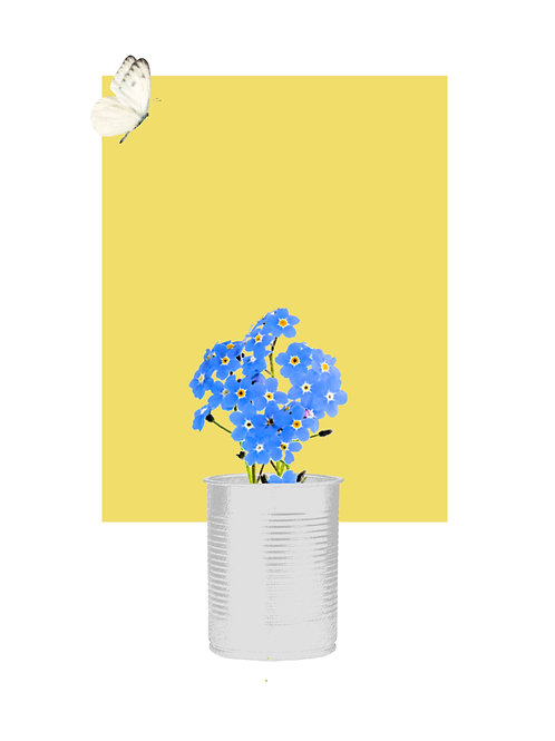 Forget-Me-Not with White Butterfly Flying (Delicious Yellow)