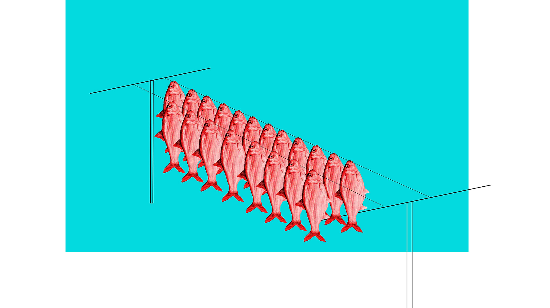 red herring hanging out to dry copy.jpg