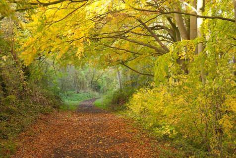 Local Bridle Path