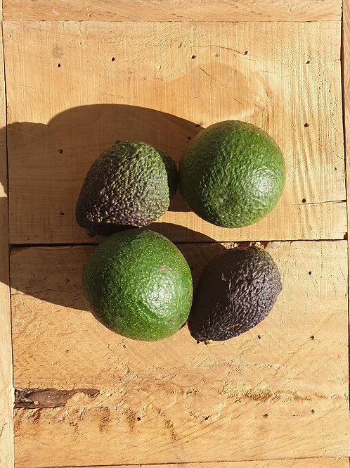 Avo's - 4 Hass & Reed