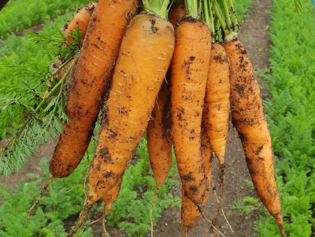Super Tasty Carrots
