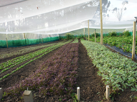 How we grow Nutrient Dense Food in our Backyard