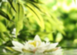 fleur reiki