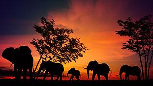 elephant-2231690.jpg