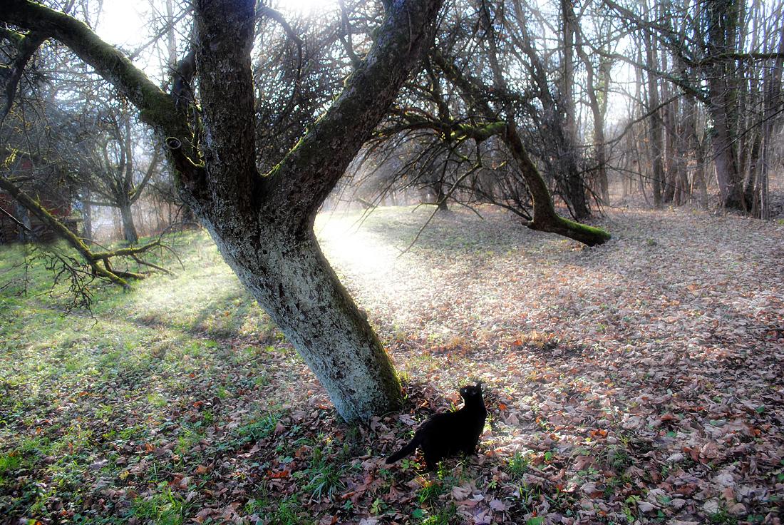 magischer Obstgarten mit Katze