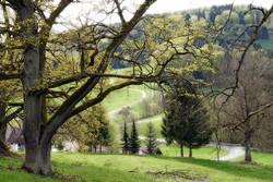 Eichen bei Siegersdorf