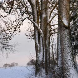 Winterstimmung Bäume