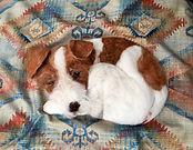 Sleeping Jack Russel pillow.jpeg