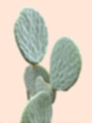 lone-cactus-beige-blush-bakground.jpg