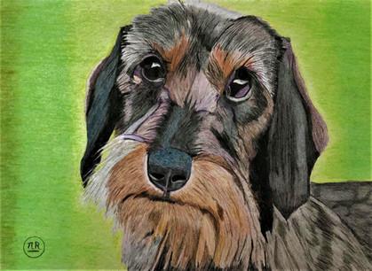 Le chien d'un ami - VENDU