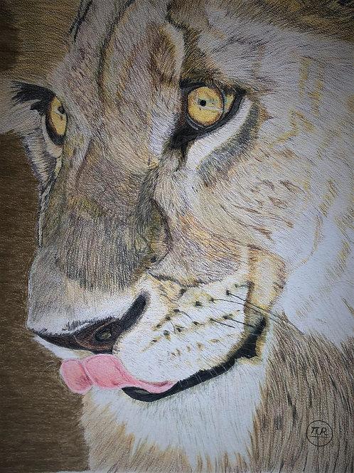 Visage de lionne.