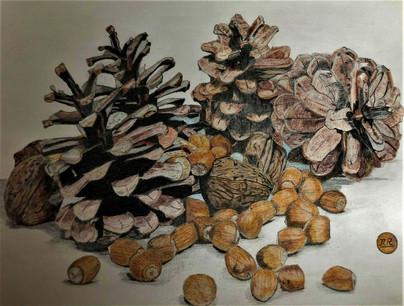 Pommes de pins noix et noisettes