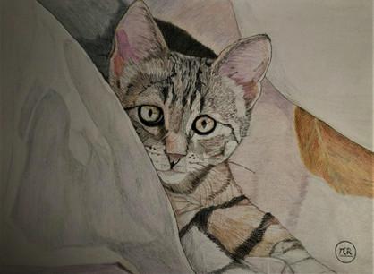 Petit chat tigré