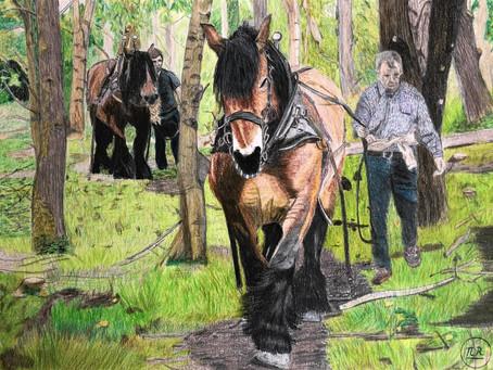 Débardage au cheval.