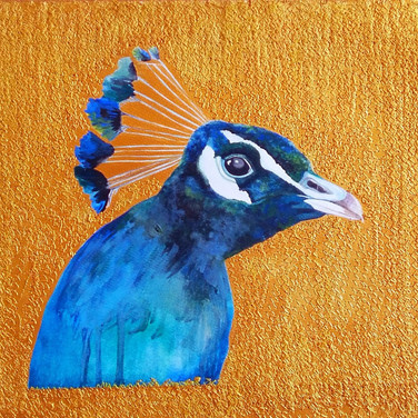 Peacock (孔雀), 2016