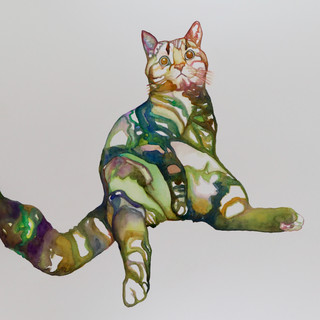 Hung-over cat