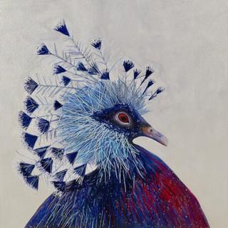 Queen pigeon