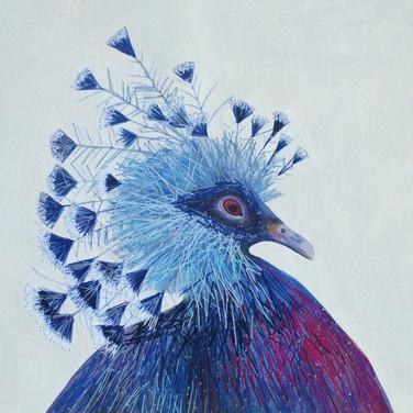 Queen pigeon (皇后鴿子), 2019