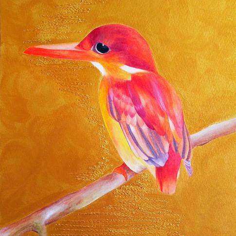 Oriental kingfisher (東方翠鳥), 2017
