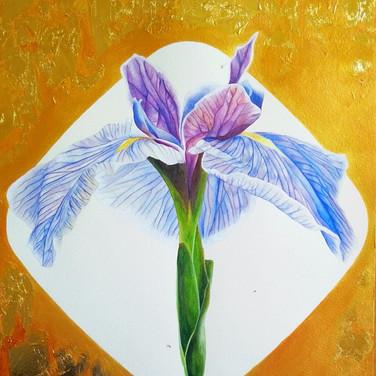 Blue Japanese Iris (藍色鳶尾), 2017