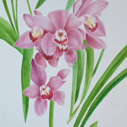 Pink orchid (粉色蘭花), 2018