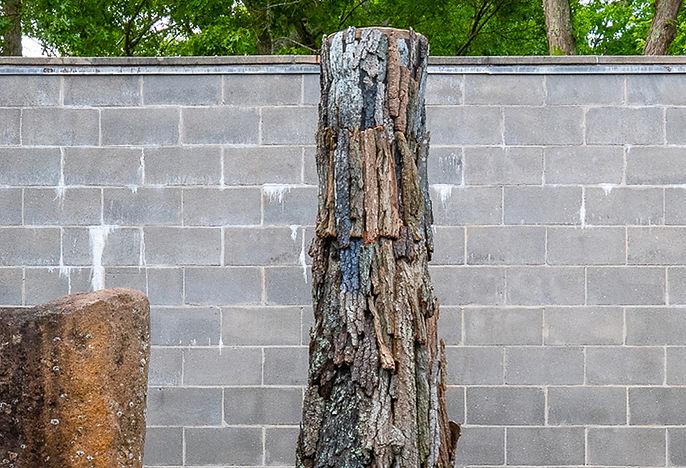 Tree cropped.jpg