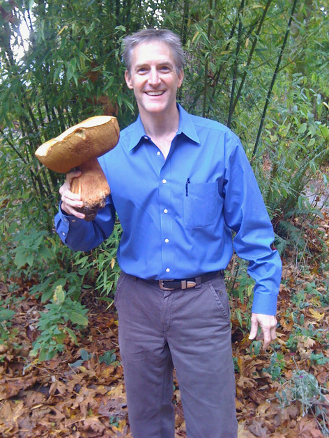 Mushrooms are amazing - King Bolete