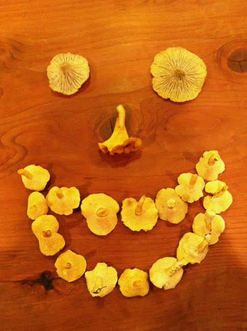 Chanterelles and hedgehogs