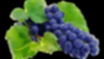 kisspng-wine-grape-juice-grapevines-nebb