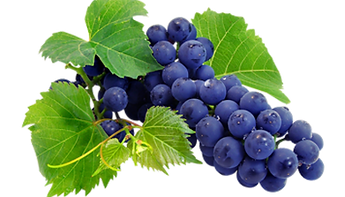 kisspng-wine-grape-juice-grapevines-nebb